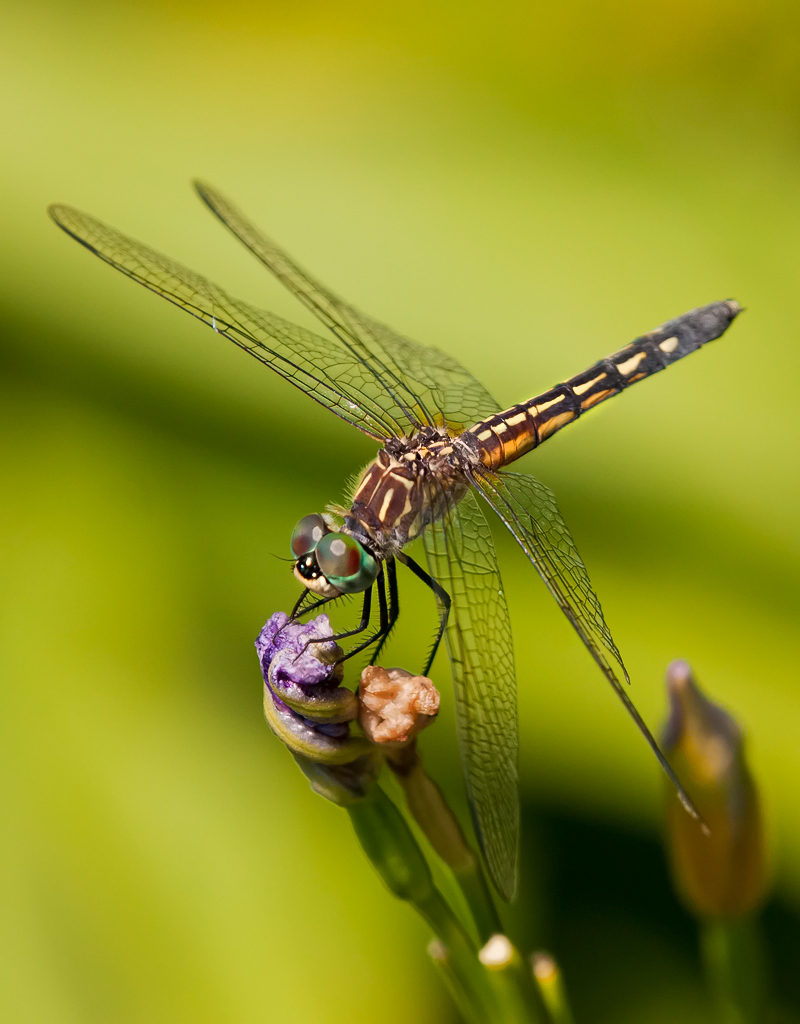 Dragon Fly_14